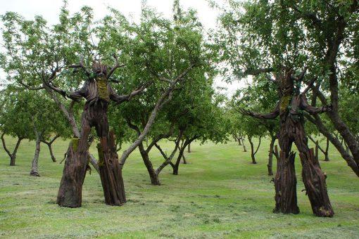 Tree Stilts