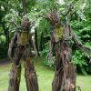 Tree Stilts