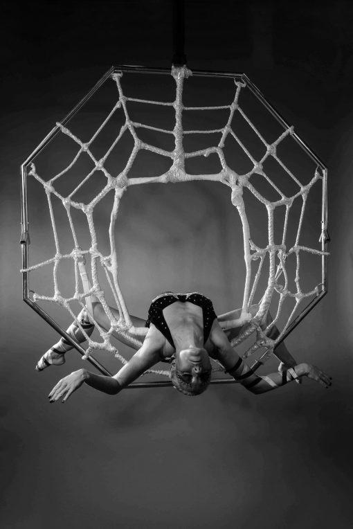 Aerial Spider